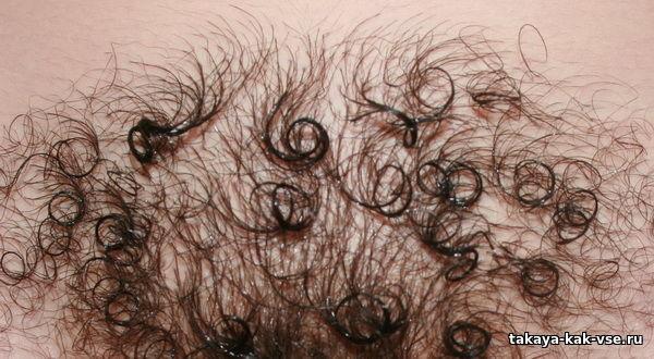 волос с женского лобка как приворот комментарии